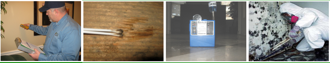 Affinity Group Mold Remediation