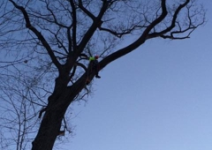 Lou's Cutting Edge Tree Service - Eaton Rapids, MI