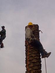 Special Tree Service
