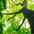 LCC Tree service