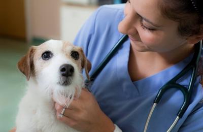 Dickinson Animal Hospital & Pet Wellness Center - Dickinson, TX