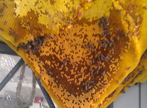 Johnson Bee Removal Services - Naples, FL
