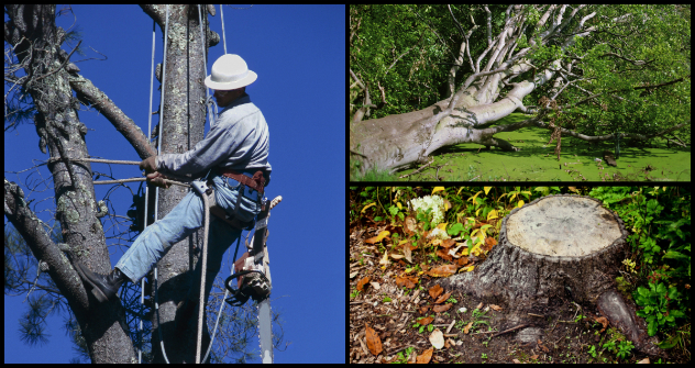Tree Services in Fairview