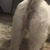 Barkie Bow Wow's Pet Salon