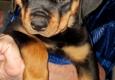 Aunt Karen's Lucky Dogs, Karen Comstock CBCC-KA - Hendersonville, NC