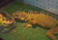7 Seas Pet Care Center - Chicago, IL
