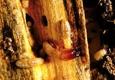 AMPM Exterminators - Kirkland, WA