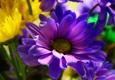Angelone's Florist - Raritan, NJ