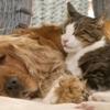 Apollo Animal Hospital & Pet Resort