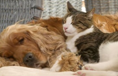 Apollo Animal Hospital & Pet Resort - Huntsville, AL