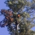 Singletary Tree Service