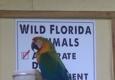Wild Florida - Kenansville, FL