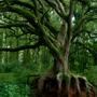 Community Tree Preservation - CLOSED