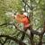 Artistic Trees