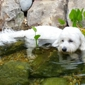 Capital Veterinary Specialists - Tallahassee, FL. Griffin in his pond