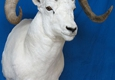 A Lasting Memory Taxidermy - Englewood, CO