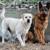 Blue Ridge Pampered Canine