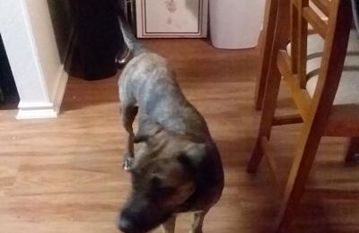 Animal Defense League of Texas - San Antonio, TX. Meet Cat the dog