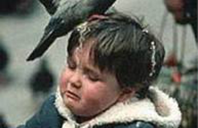 Battle Born Pigeon Control - Las Vegas, NV