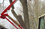Jason's Tree Service's Spider lift can fit into any tight area and access any tree!