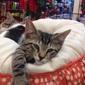 Humane Society of Greater Miami Adopt-A-Pet - North Miami Beach, FL