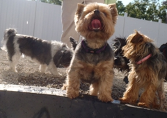 The Dog House - Traverse City, MI