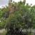 808 Tree Care