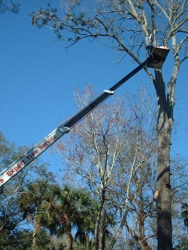 Specialty Tree Care And Landscaping LLC