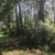 Brelands Land Clearing & Forestry Mulching