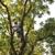 Green America Tree & Landscaping LLC