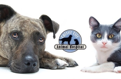 Culver City Animal Hospital - Culver City, CA