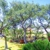 Dream Tree Services