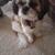 Dog Eared Corner Pet Grooming A