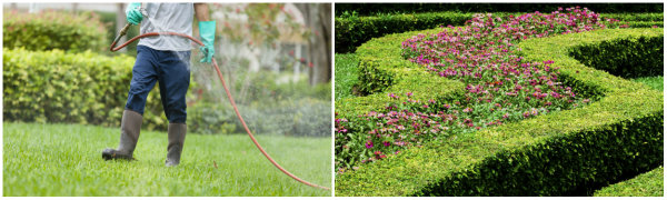 Lawn Care Service - Freedom Lawns - Charleston - SC