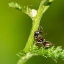 Ace Pest Control Service