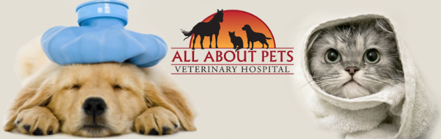 Dog and cat veterinarian in Chico