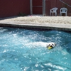 Elite  Dogs Training And Boarding