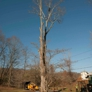All Season Tree Care - Redding, CT