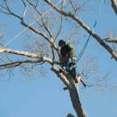 All Season Tree Care