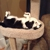 My Furry Family Pet Sitters, LLC