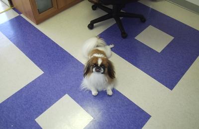 Posh Pups LLC - Fort Myers, FL