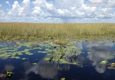 Buffalo Tigers Fl Everglades Airboat Tours - Miami, FL