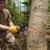 Forrest Tree Service