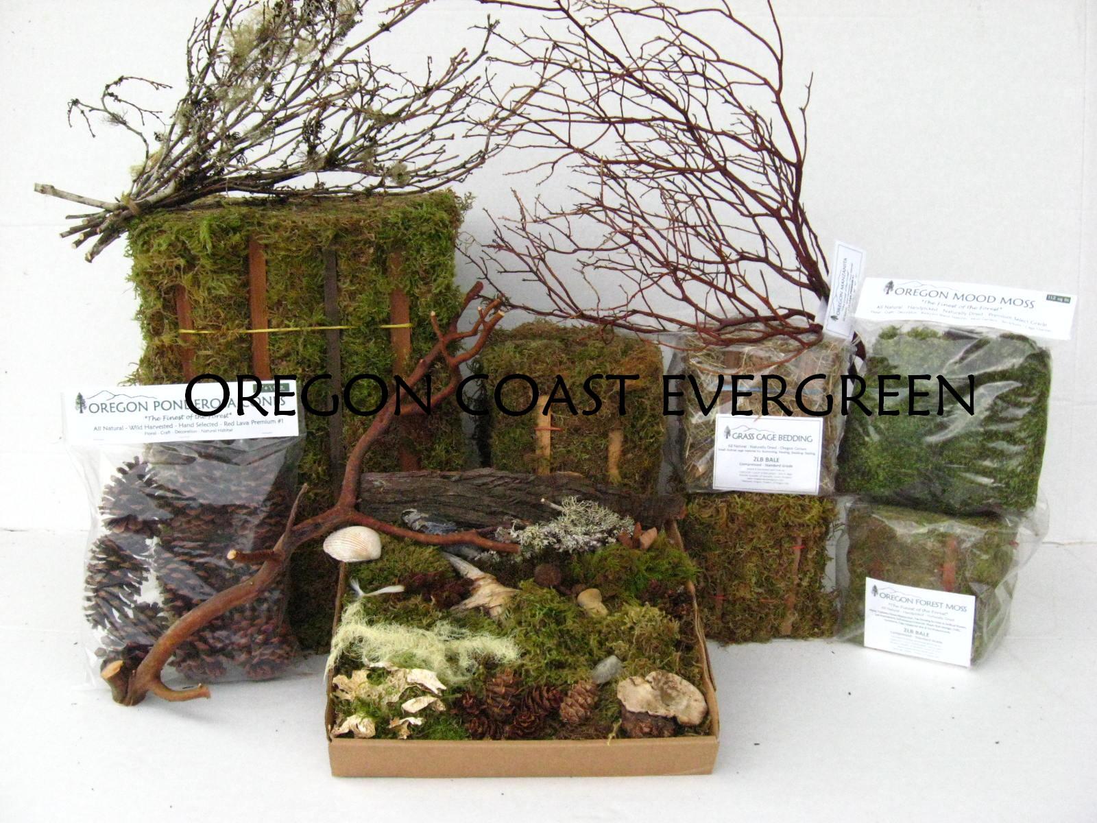Oregon Coast Evergreen Tillamook, OR 97141 - YP.com