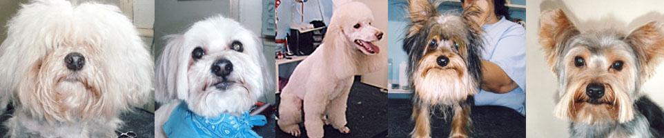 Bubbles dog grooming service Miami