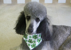 Dogville Grooming - New Melle, MO