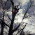 J J Improvements & Tree Service