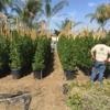 Edgar's Gardening and Tree Service