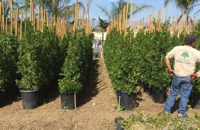 Edgar's Gardening and Tree Service - Pasadena, CA