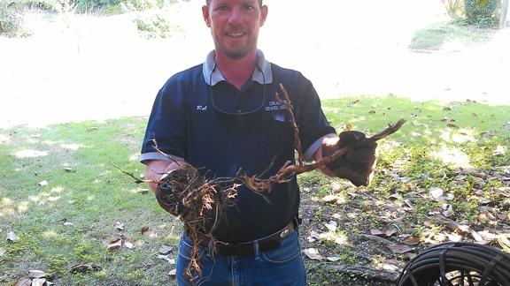 Drain Pro Sewer Service - Tuscaloosa, AL. Thick magnolia tree roots